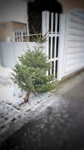 Christbaum sammeln @ vor Ihrer Haustür